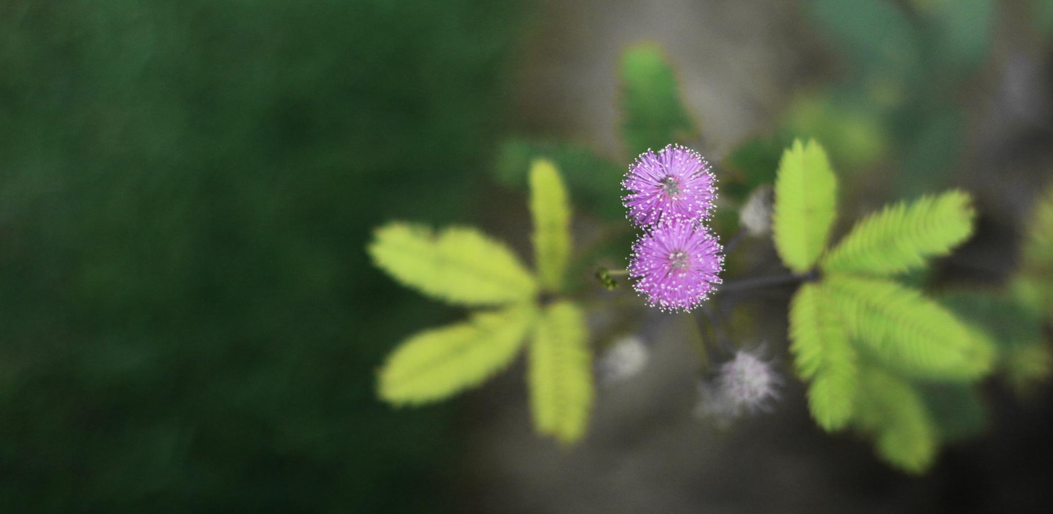 delicate moments by GitiThadani
