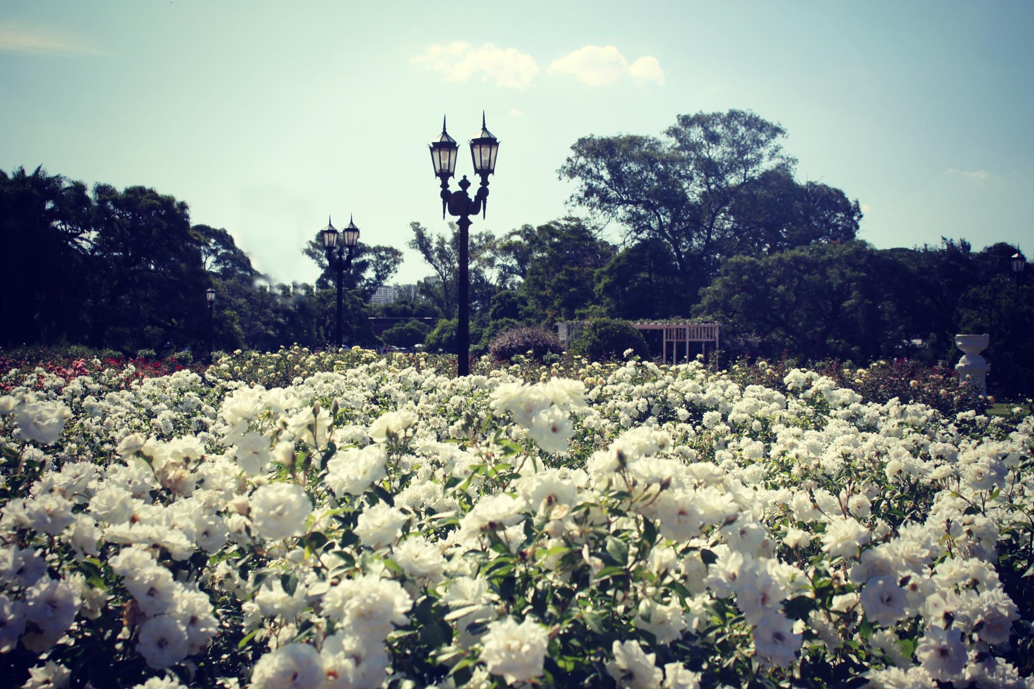 White Garden by carolina.abemiel