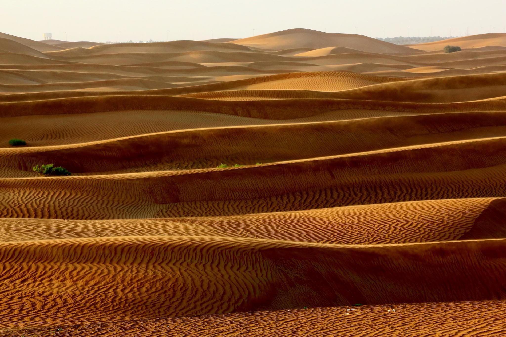 Beauty of undulating sand dunes by zenilk