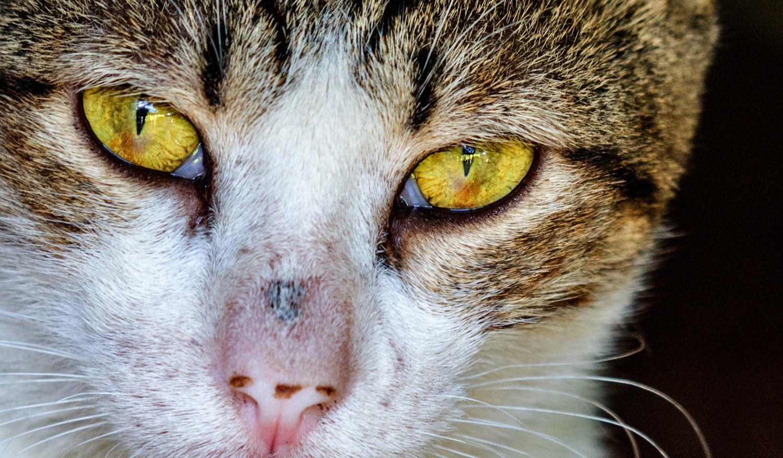 Golden Eye by Deon Warrington