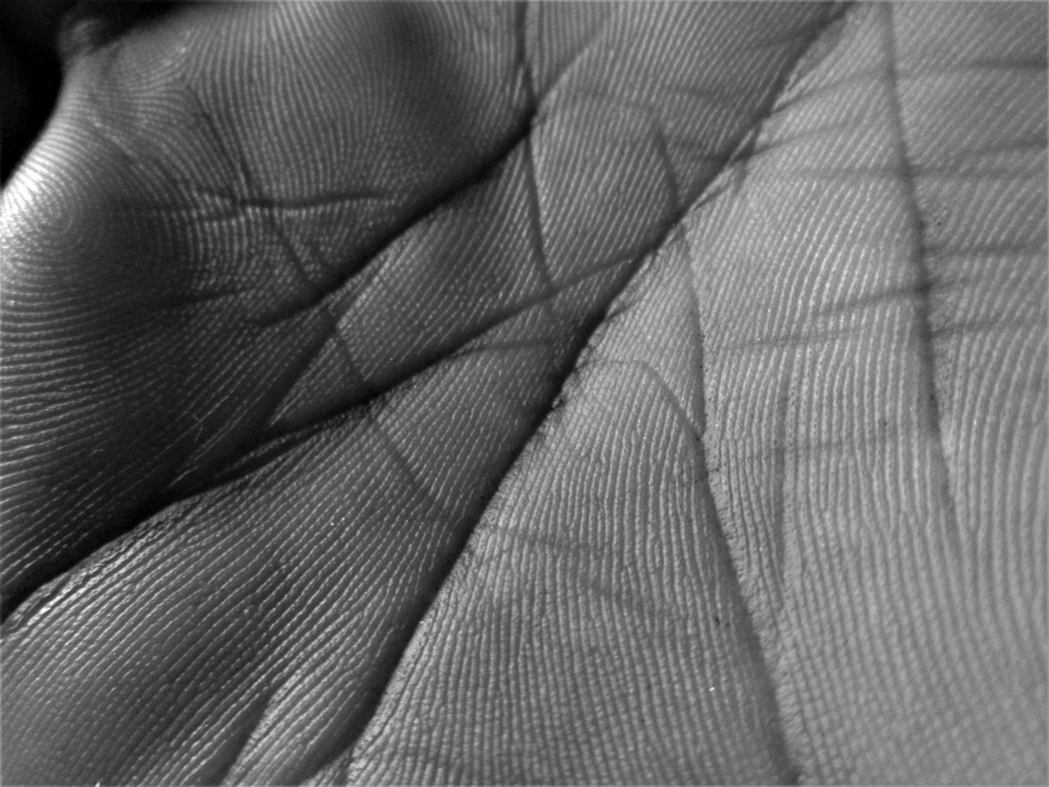 Palm Lines by Siddharth Sanyal