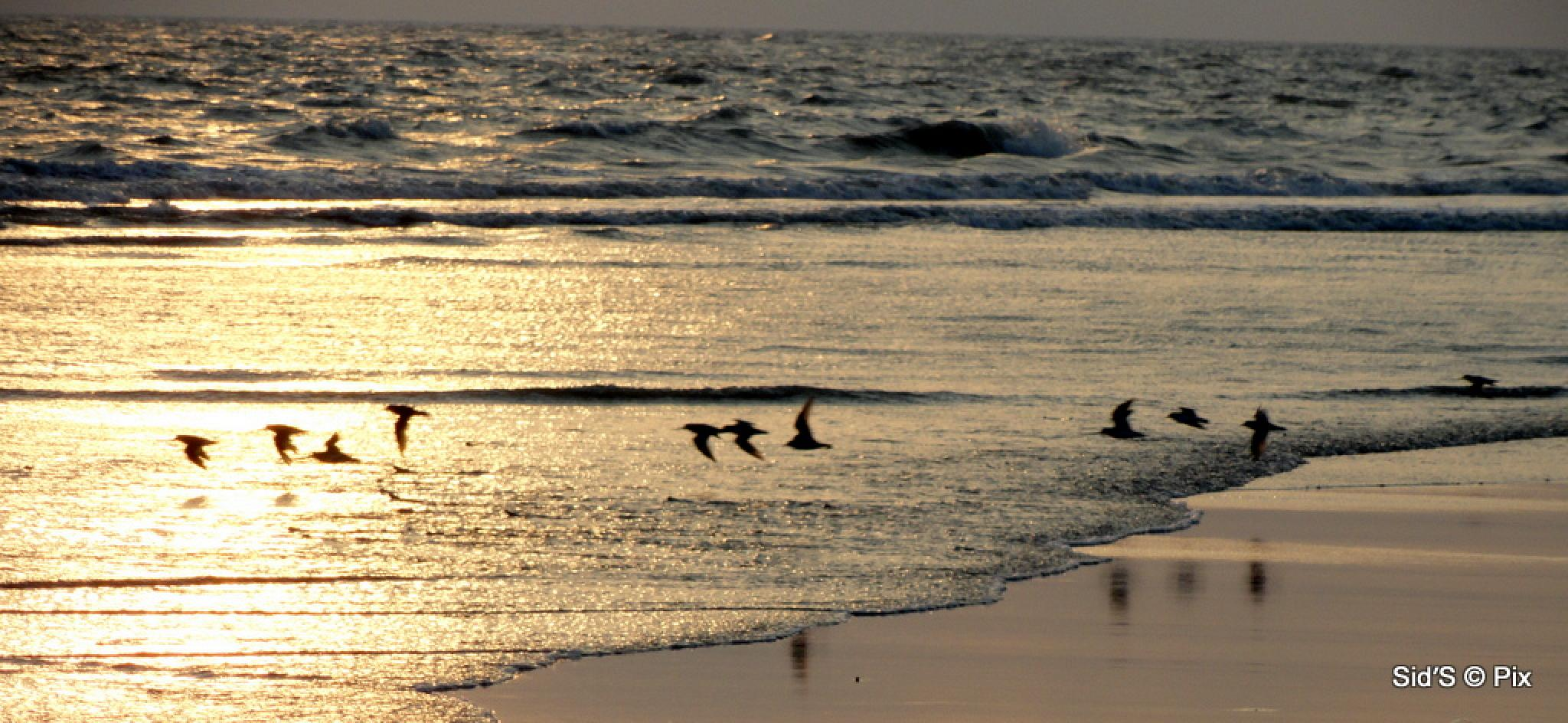 Photo in Sea and Sand #birds #sunset