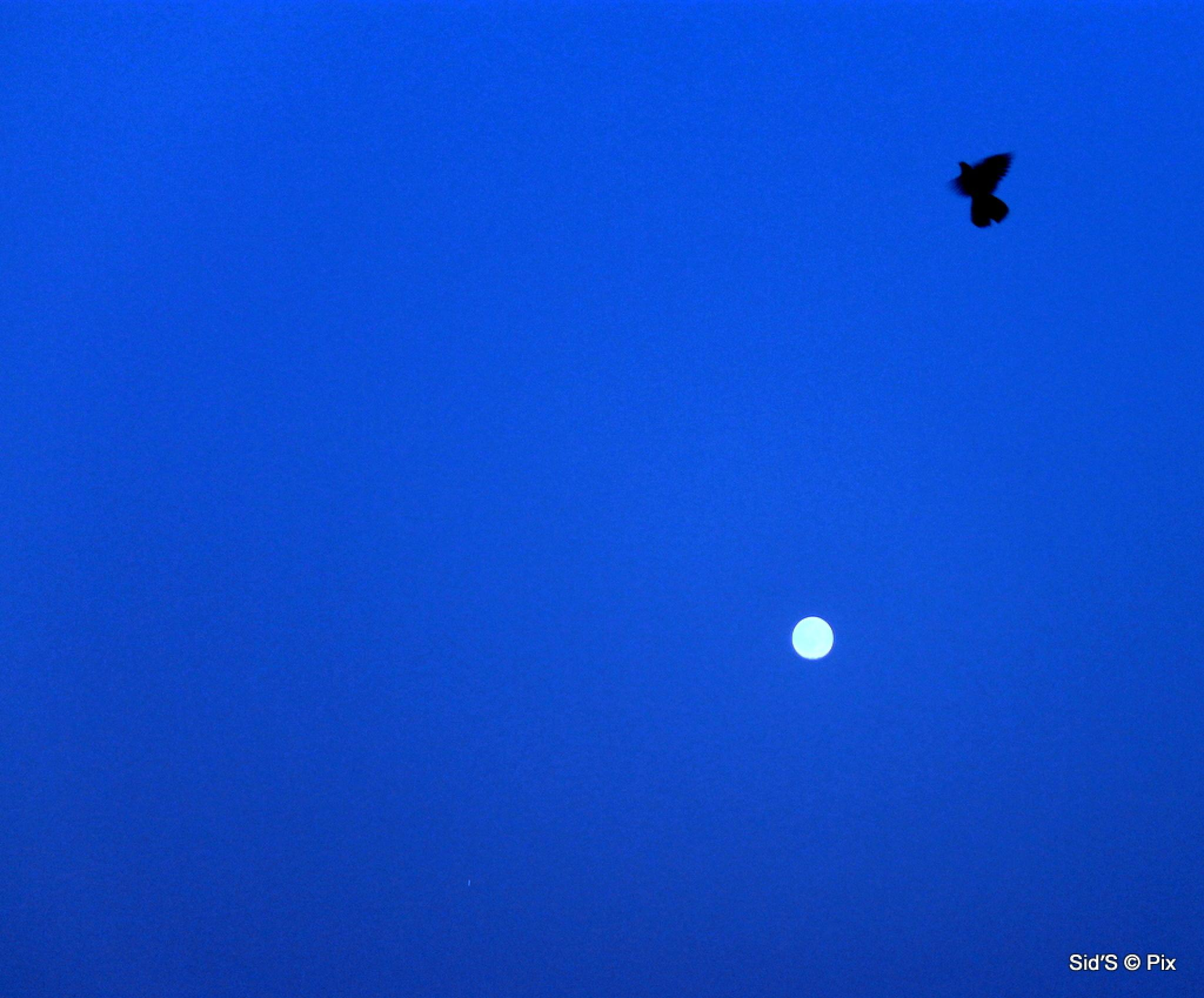 One flew over the moon by Siddharth Sanyal