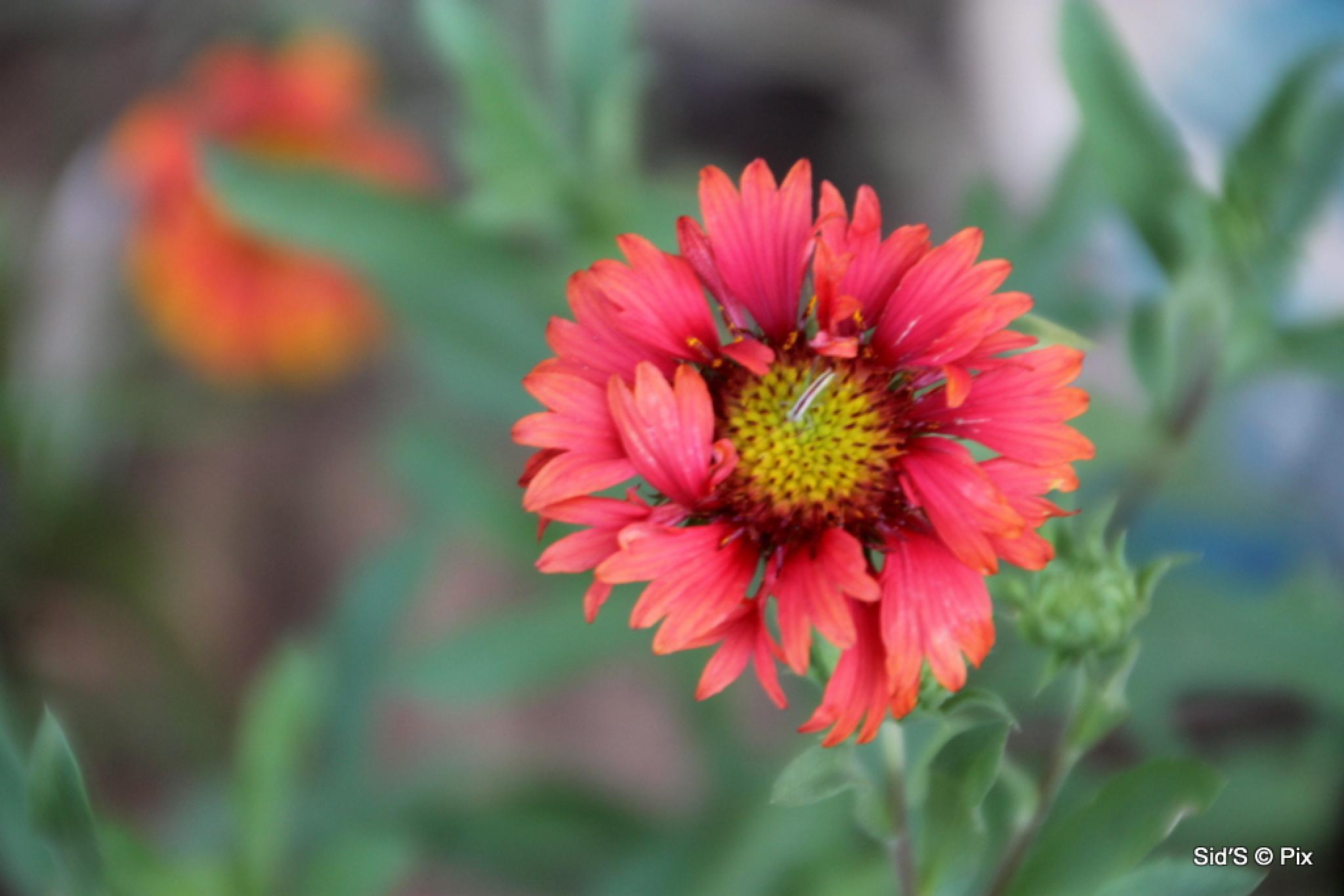 Flower #14 by Siddharth Sanyal