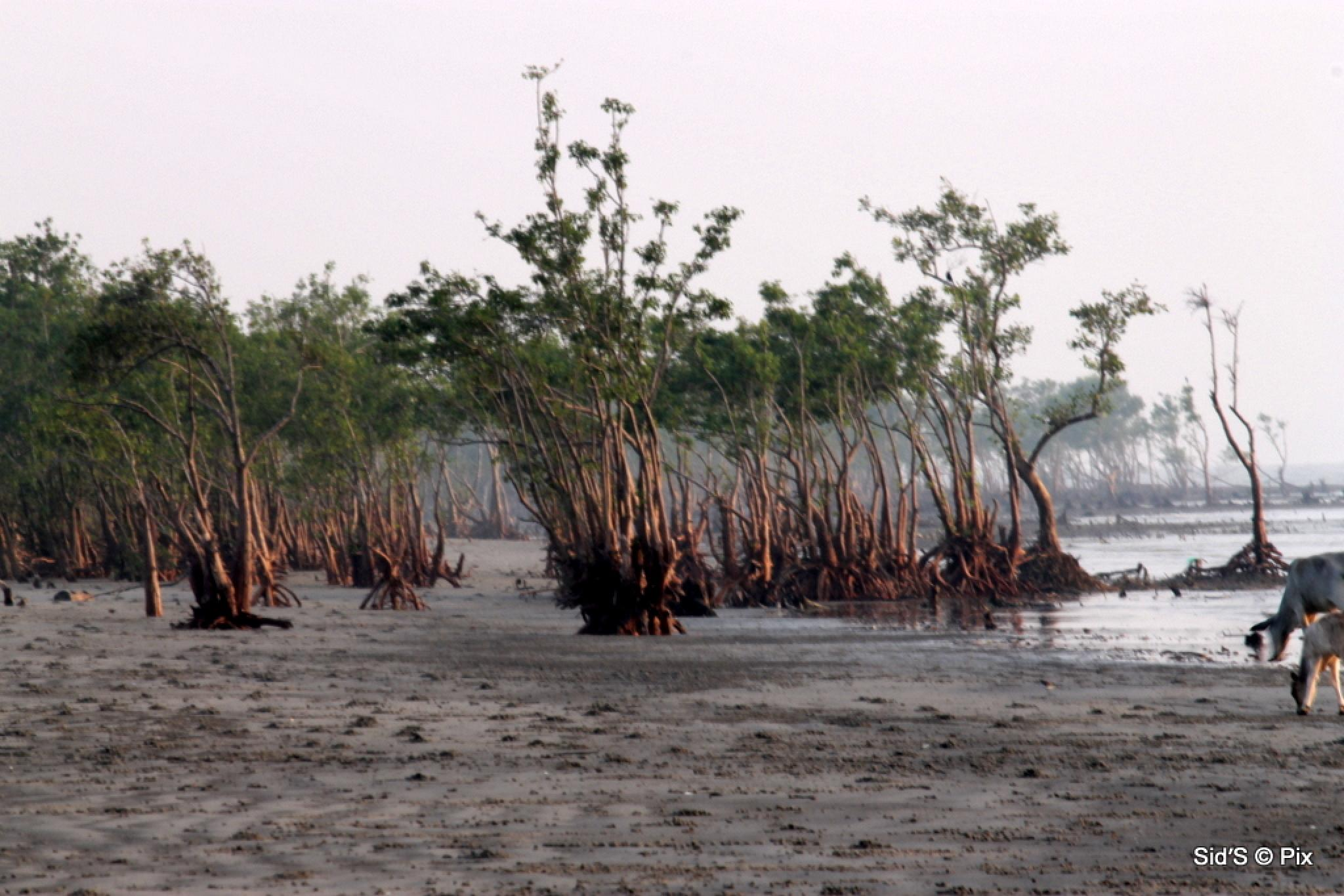 The Mangrove Forest Begins by Siddharth Sanyal