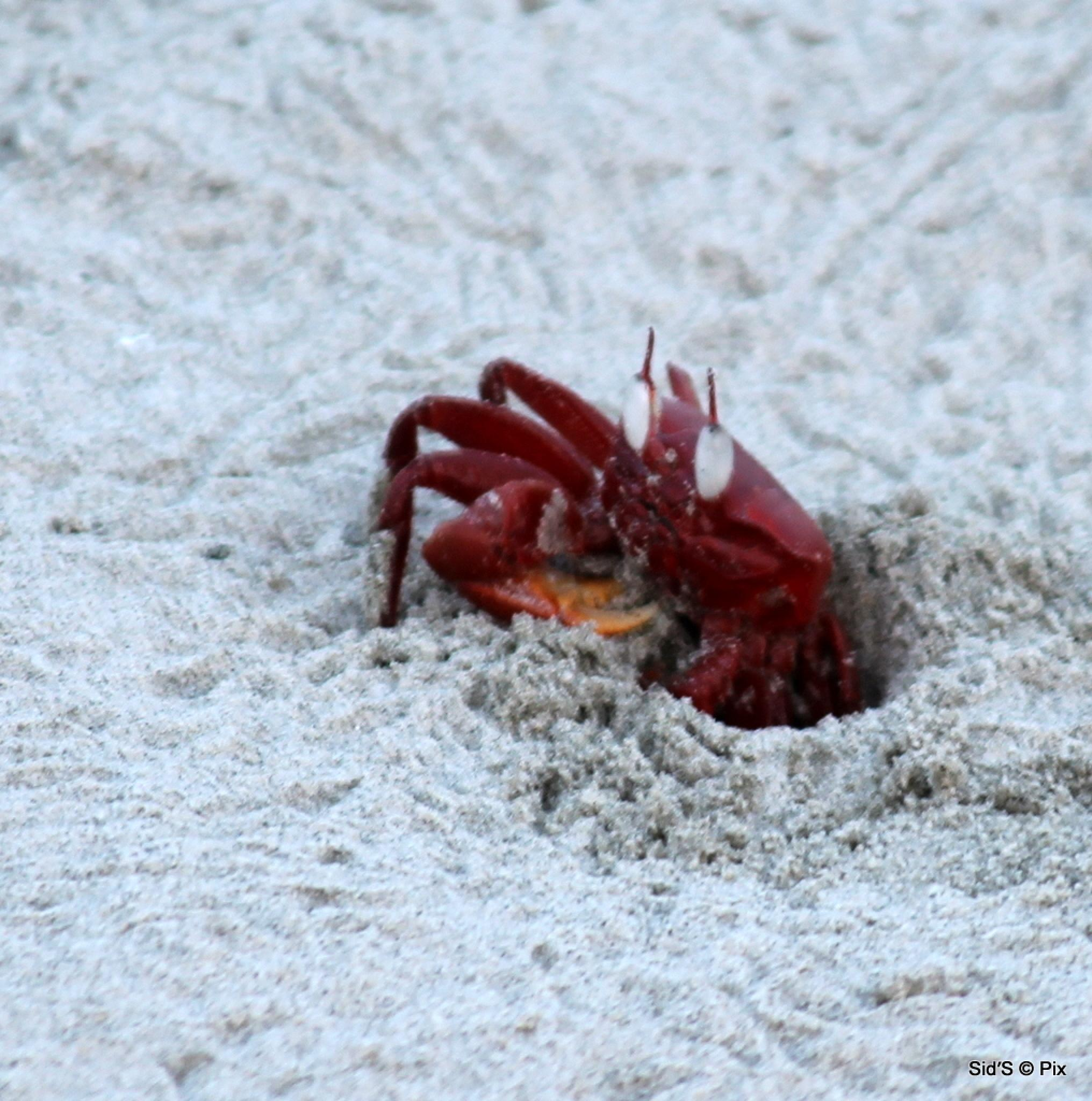 A crab finds its hole by Siddharth Sanyal
