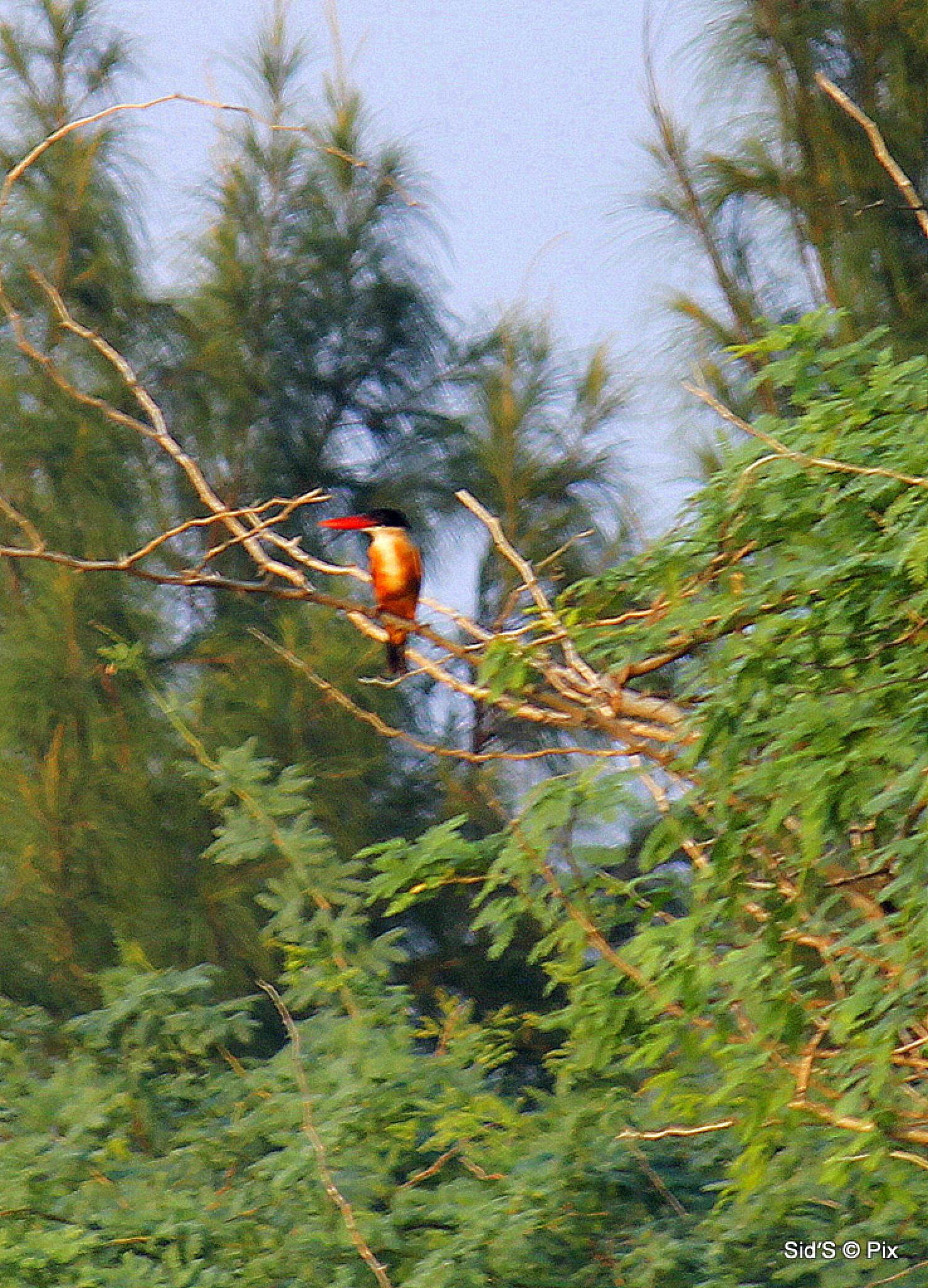 Bird on a Tree by Siddharth Sanyal