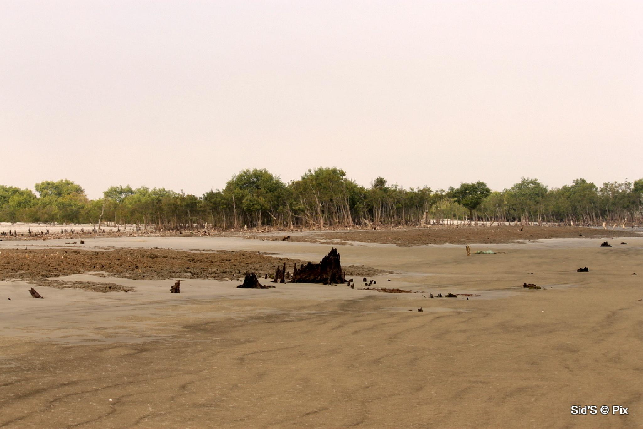 Deserted Beach at low tide by Siddharth Sanyal