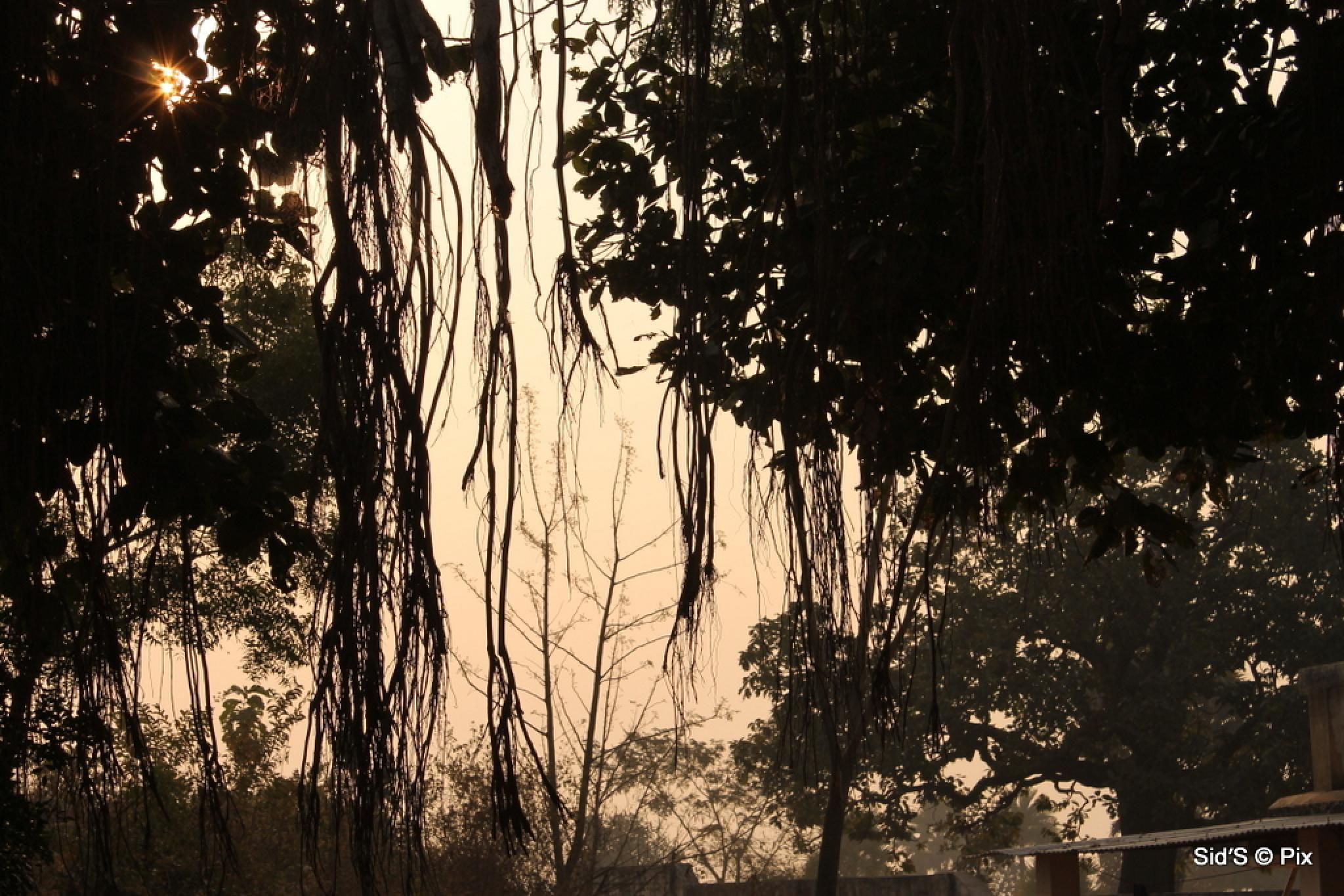 In the shade of the banyan tree by Siddharth Sanyal