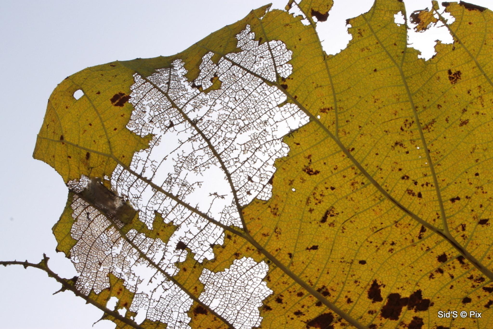 The Dead Leaf by Siddharth Sanyal