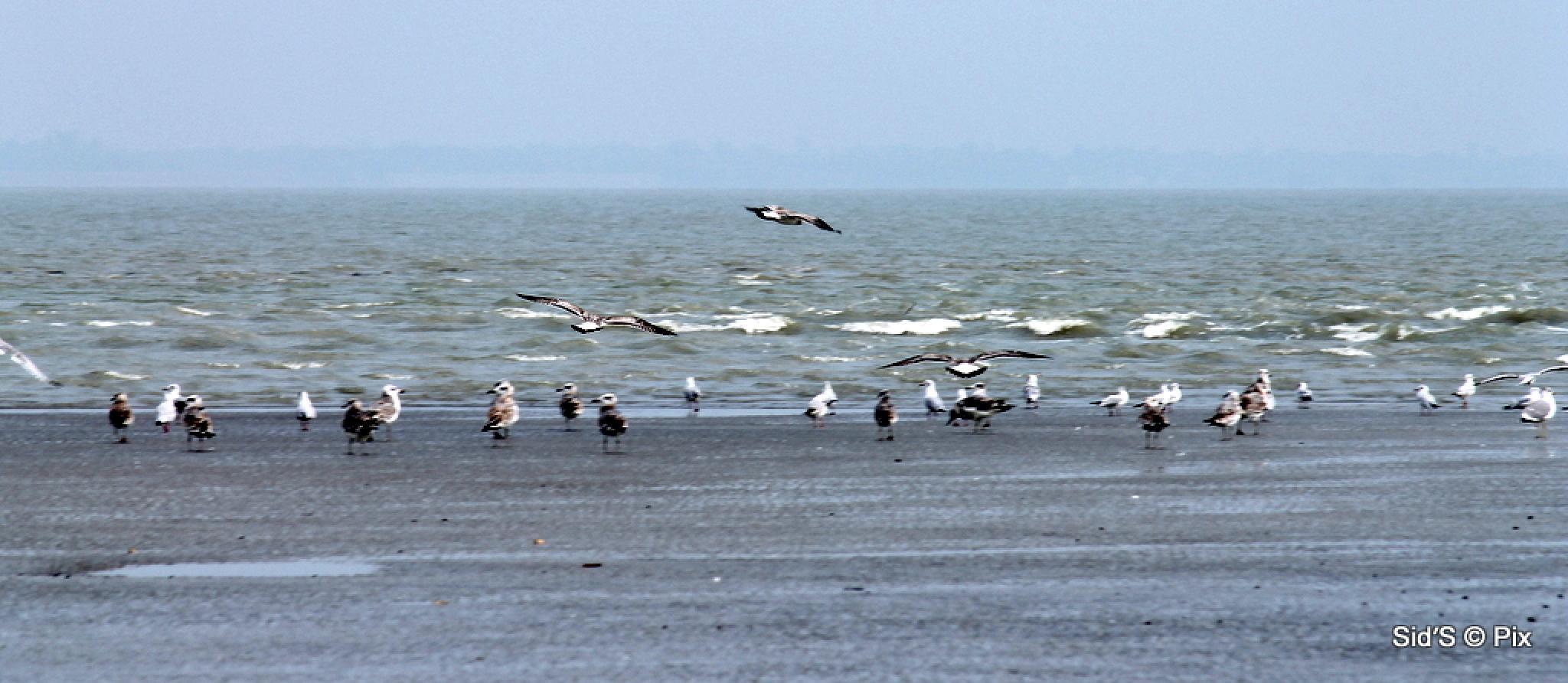 Birds on the Sand Bar by Siddharth Sanyal