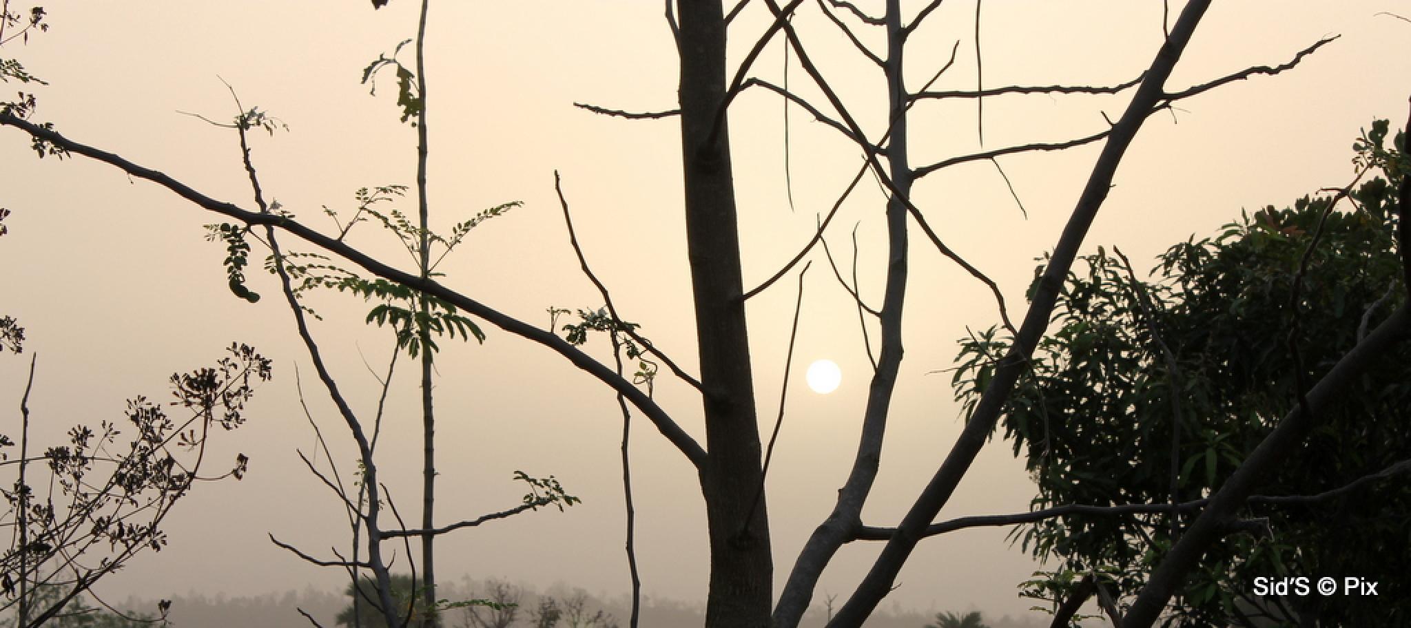 Hazy Sunrise by Siddharth Sanyal