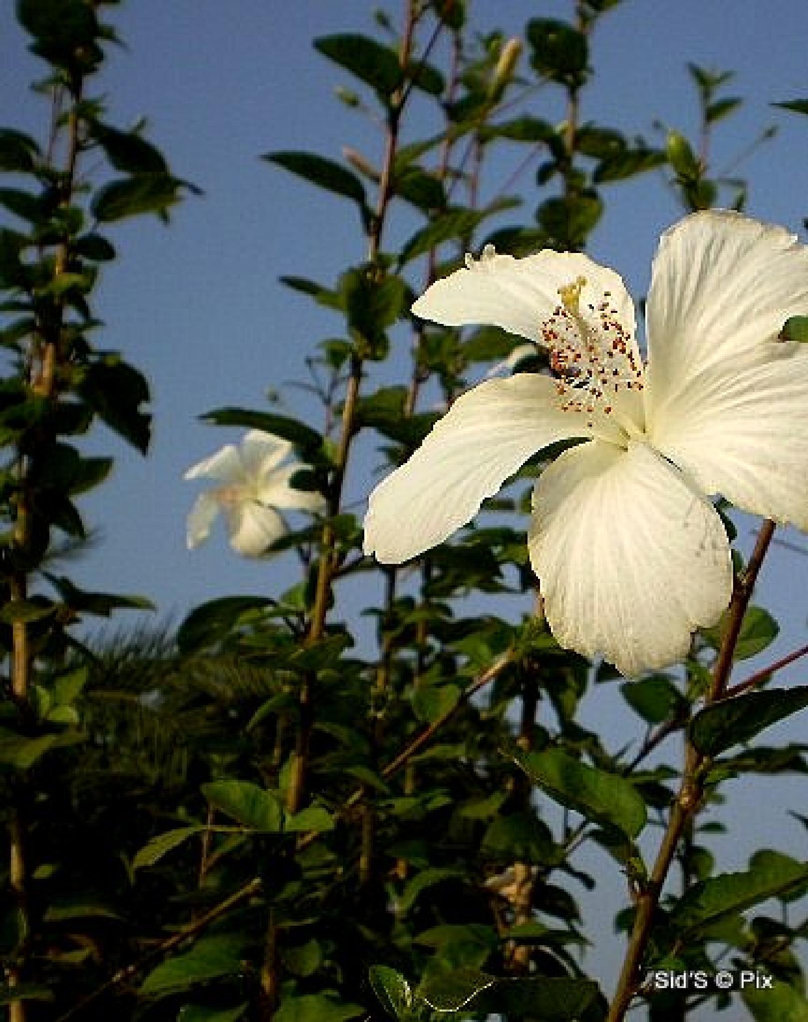 Flower #40 by Siddharth Sanyal