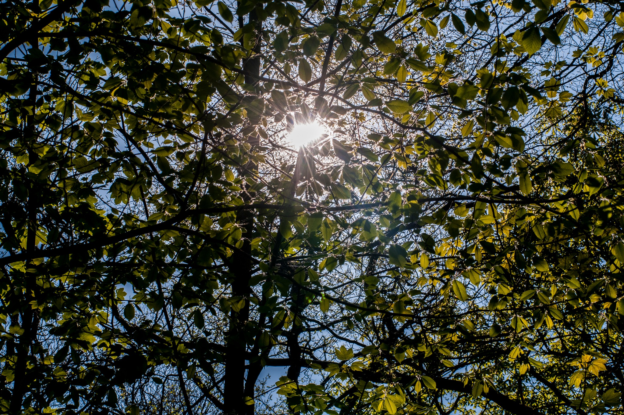 The sun seen through the leaves by Steen Skov
