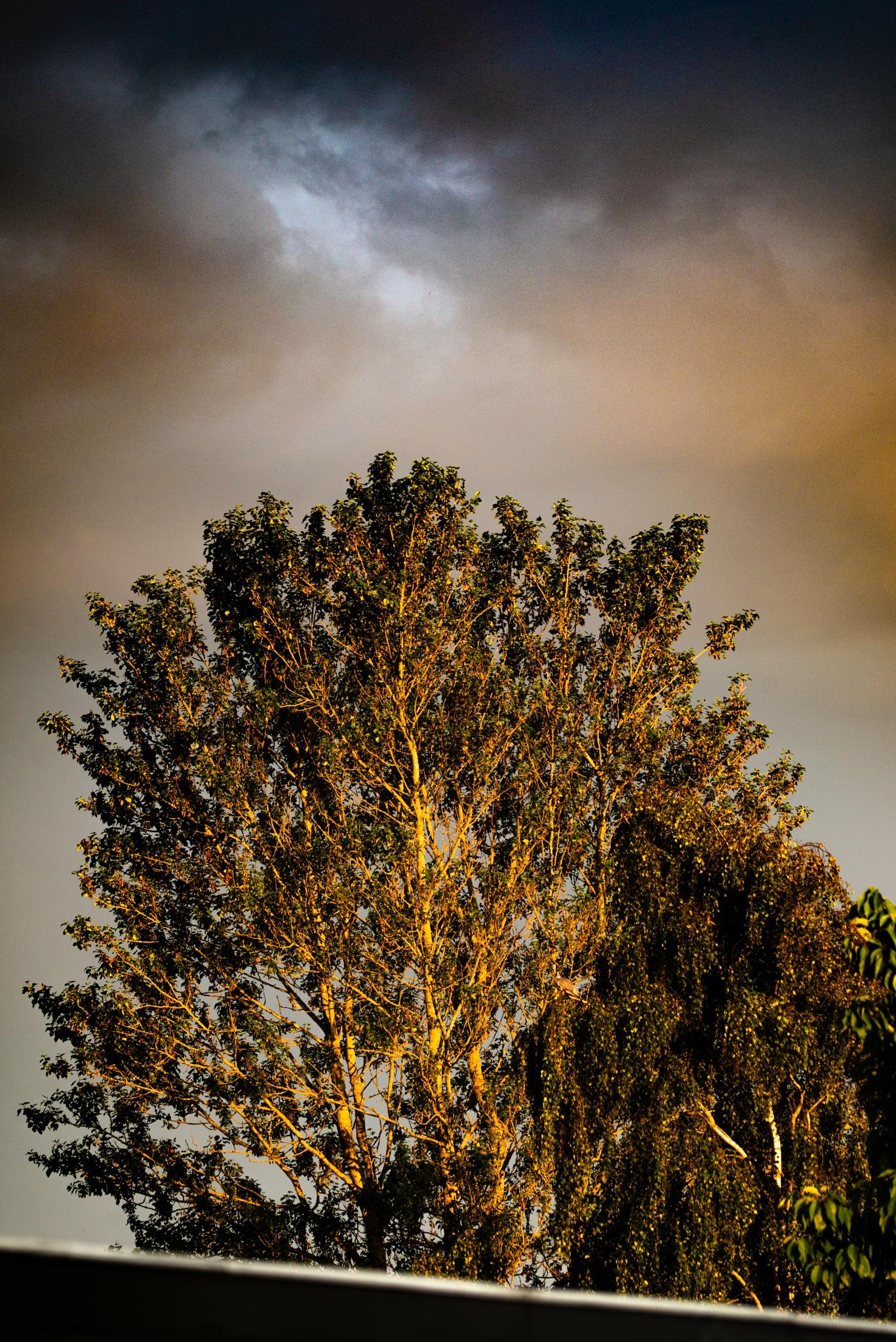 Sunset tree by Steen Skov