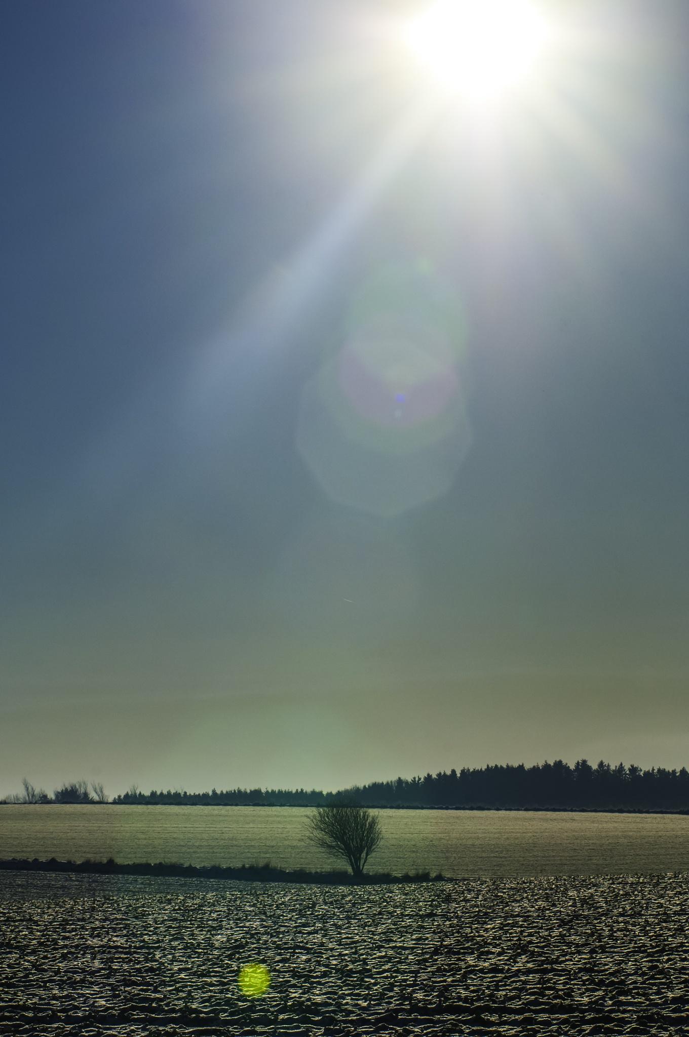 Lone shrub/tree-wanna-be by Steen Skov
