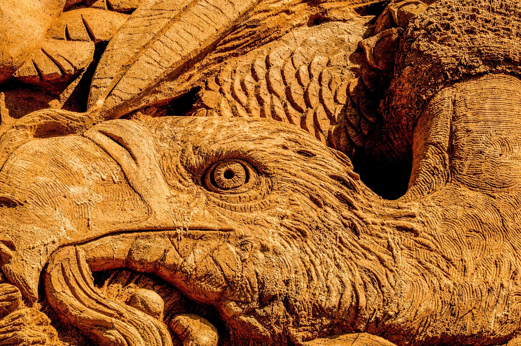 Vulture closeup by Steen Skov