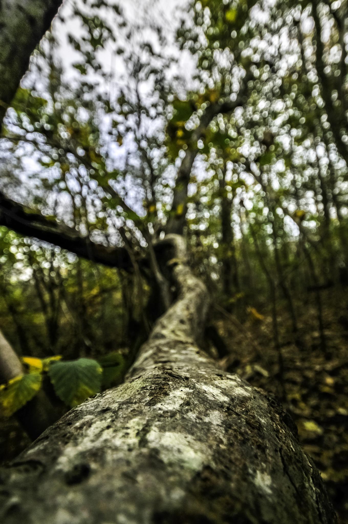 Toppled tree by Steen Skov