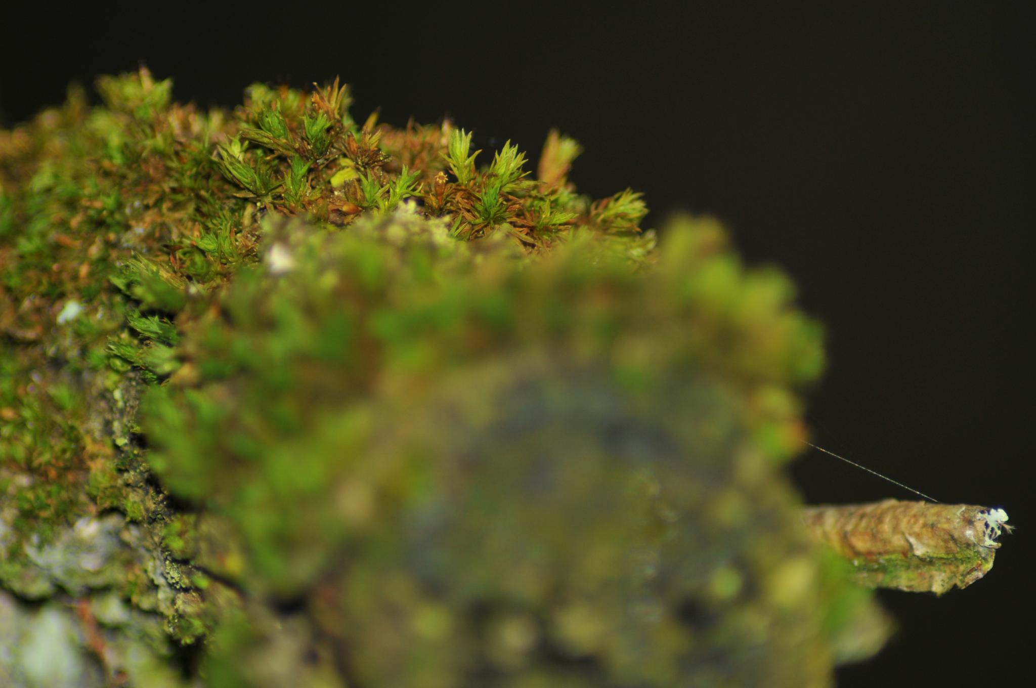 Macro on a sawed off branch by Steen Skov