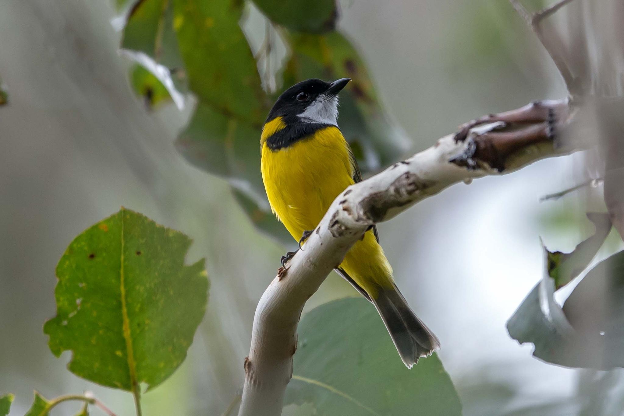 Photo in Nature #birds #animals