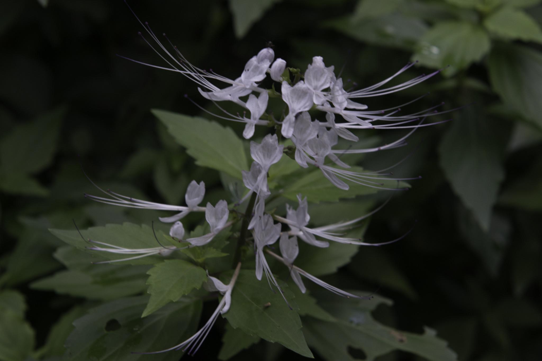 Whisper flower by chrisgnixon