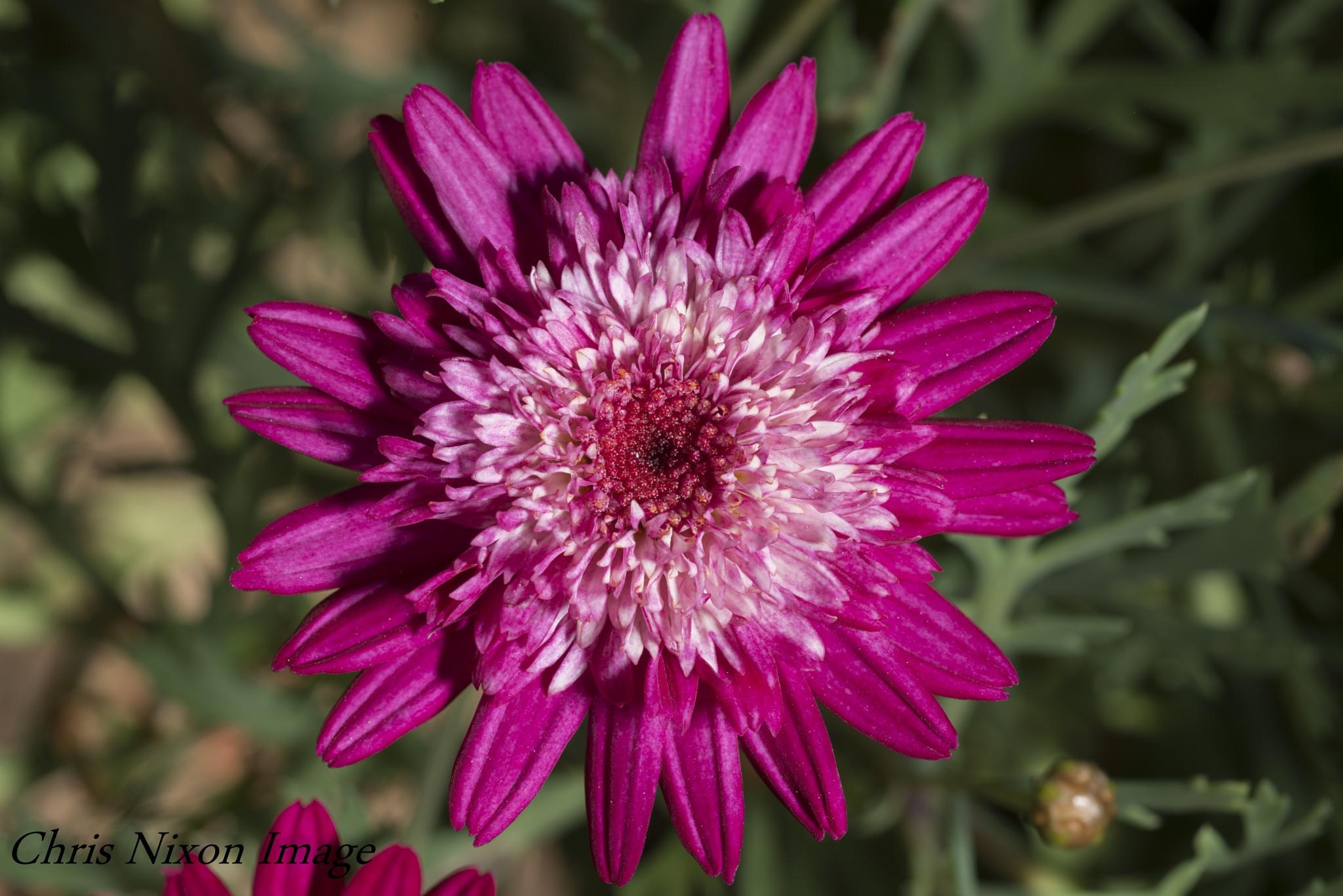 Flower by chrisgnixon