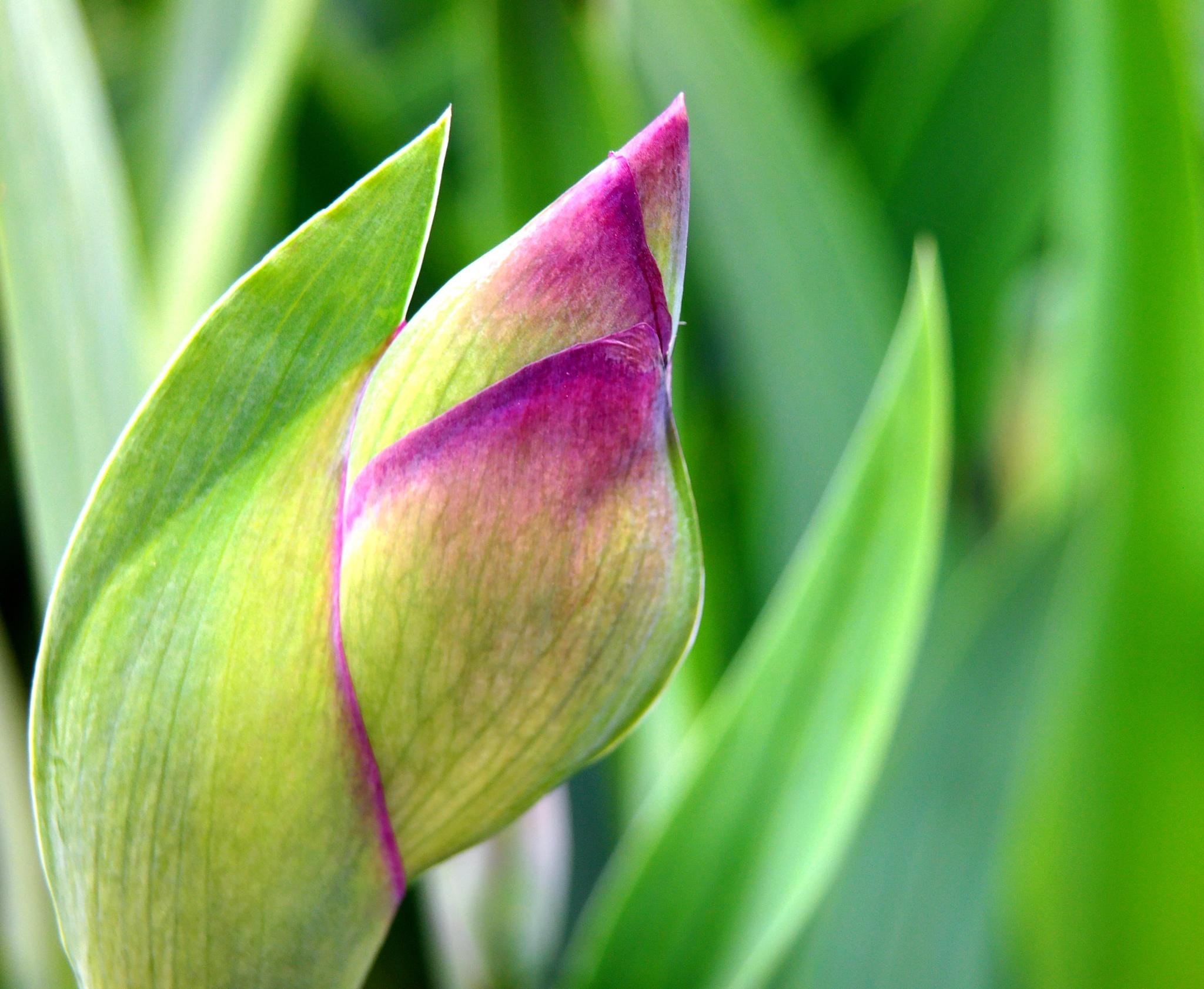 flower by Zbigniew Włodarski