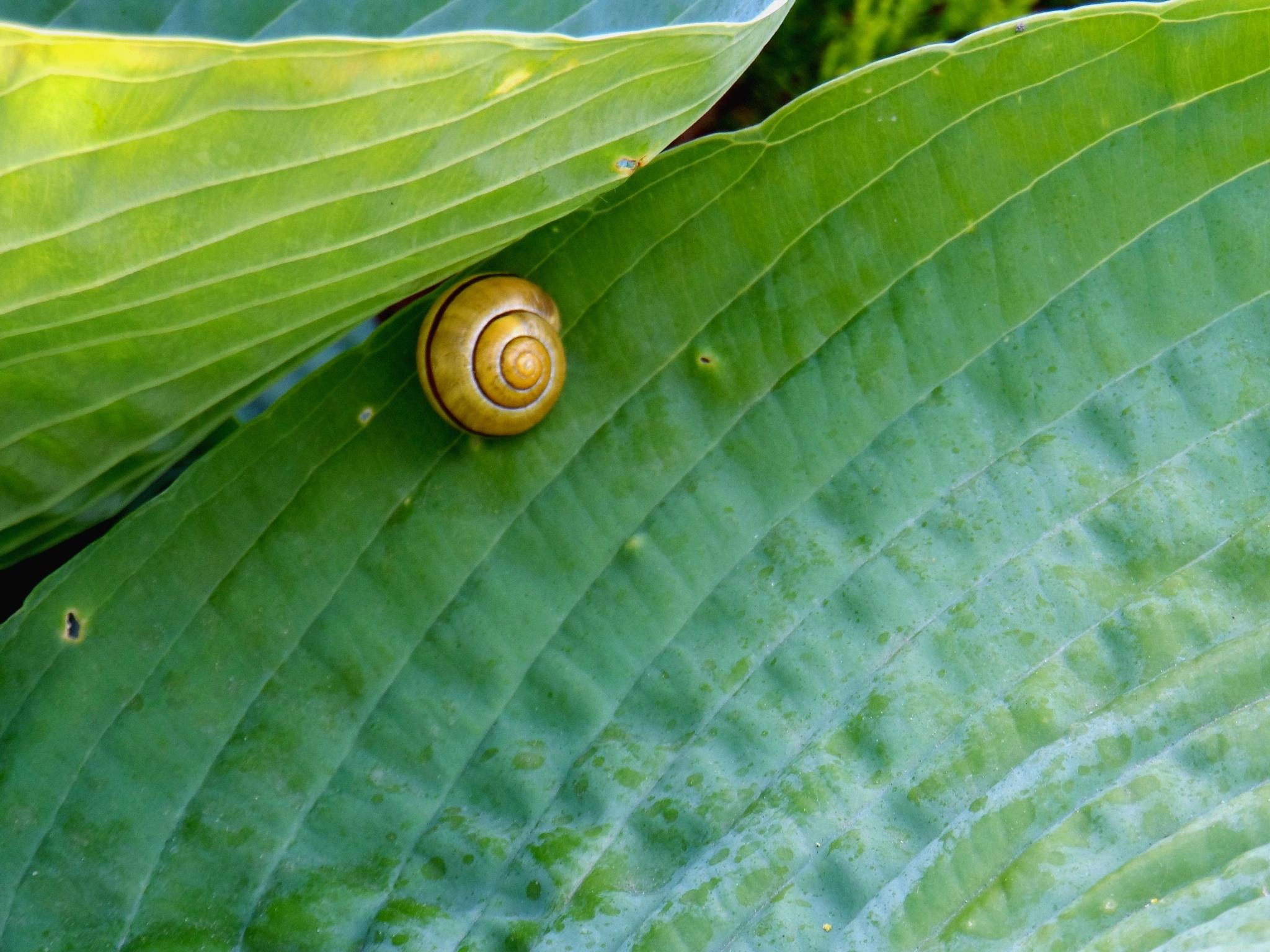 snails by Zbigniew Włodarski