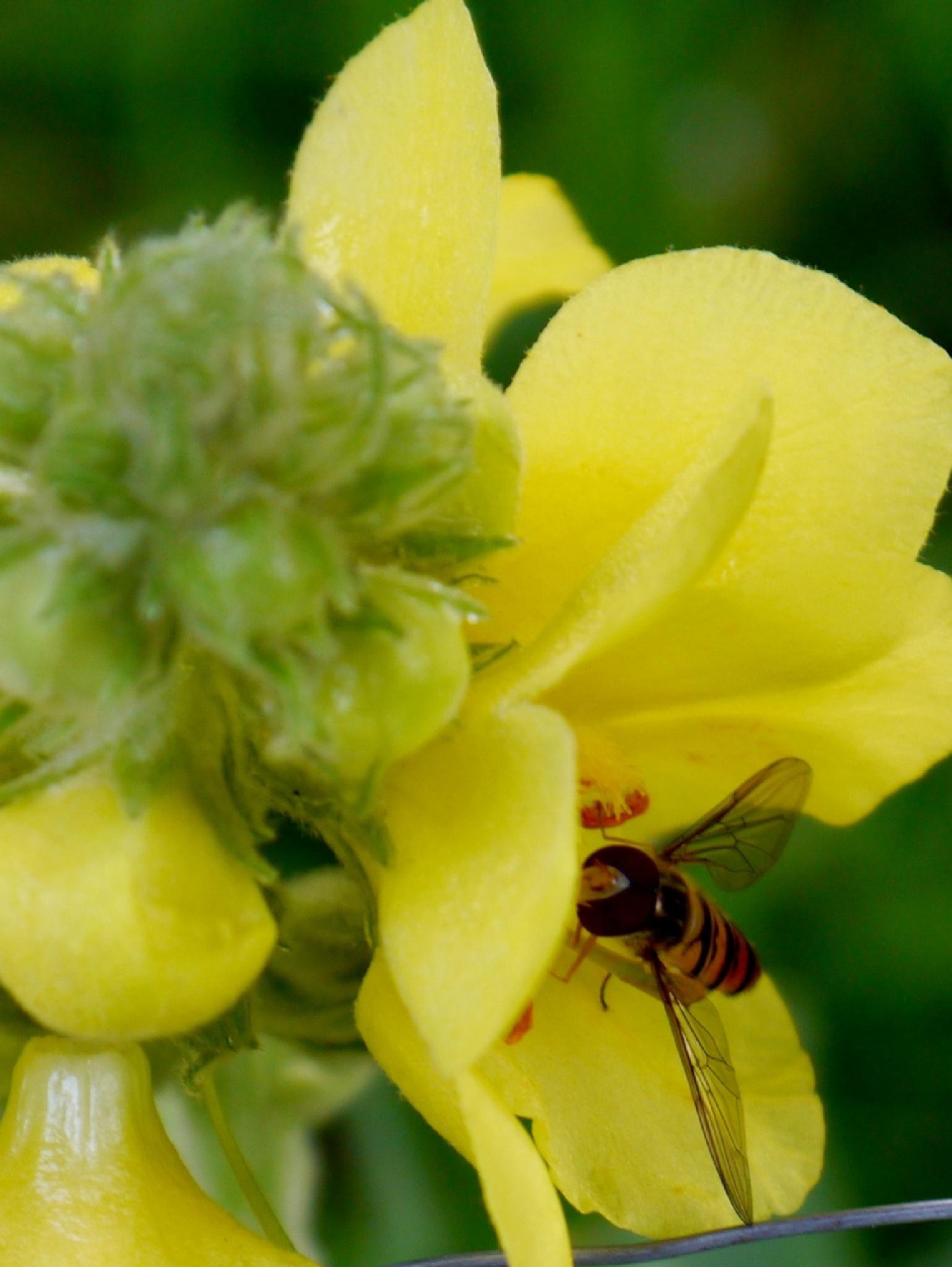 flowers and insects by Zbigniew Włodarski