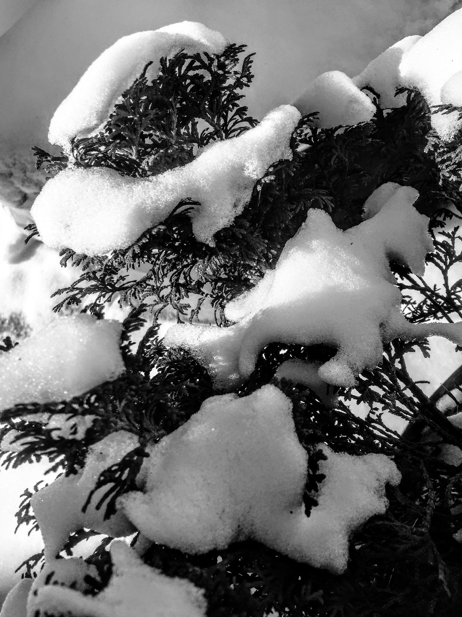 Snow by Zbigniew Włodarski