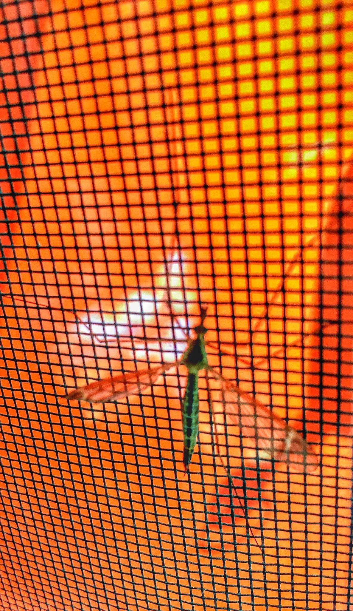 Komar w siatce czasoprzestrzeni :) by Zbigniew Włodarski