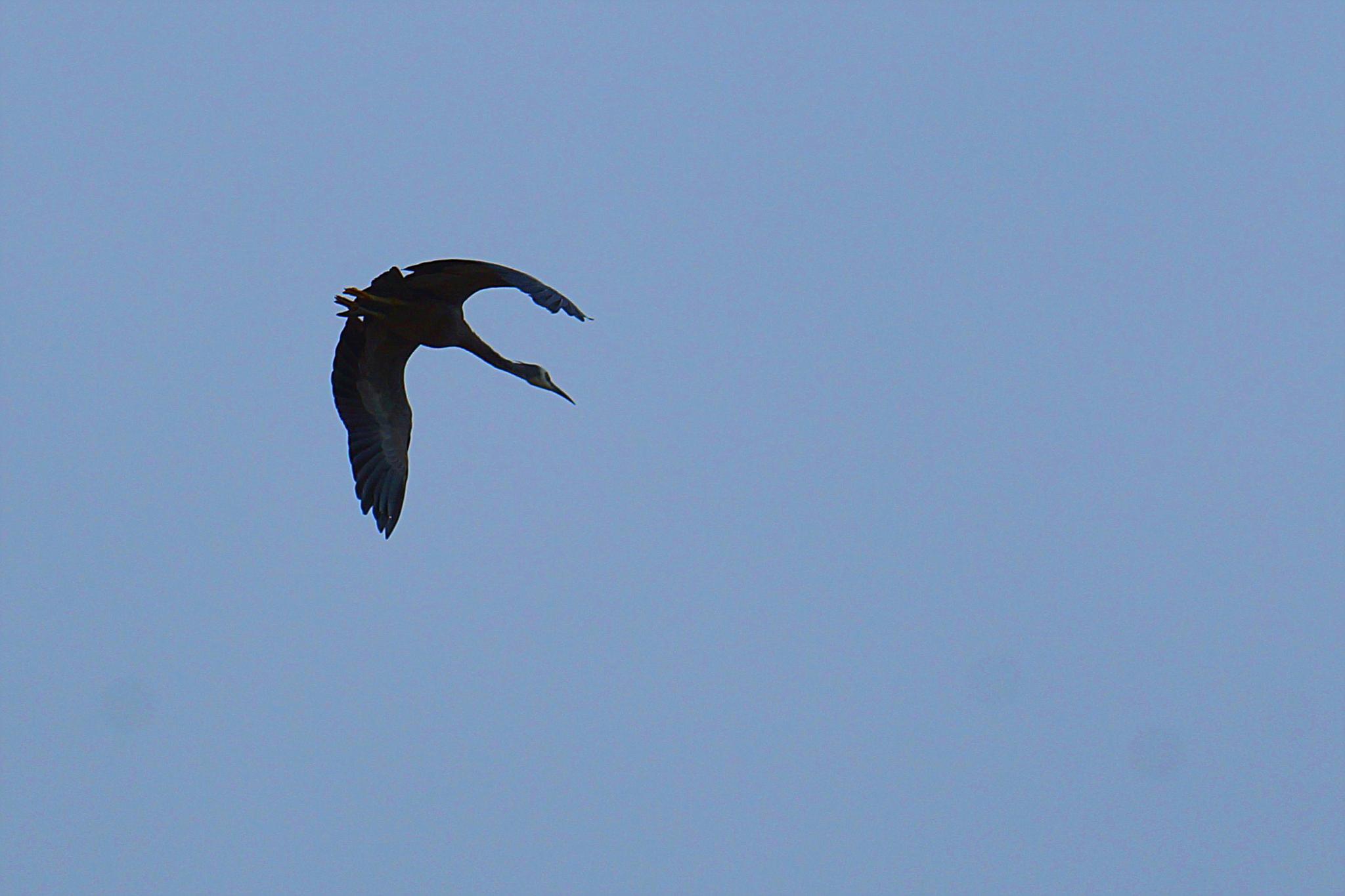 Bird silhouette  by Peter J Dwight
