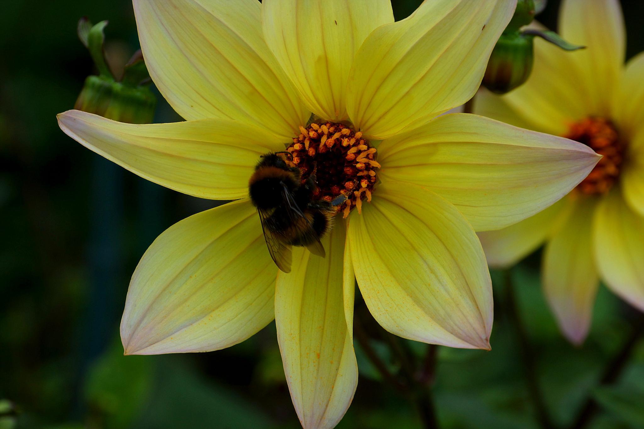 Worker Bee by Peter J Dwight