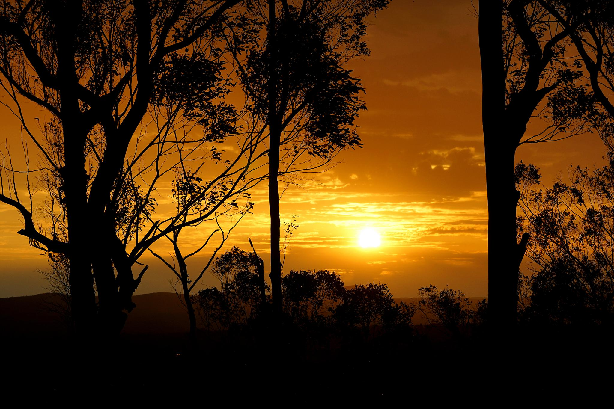 Aussie Bush Sunset by Peter J Dwight