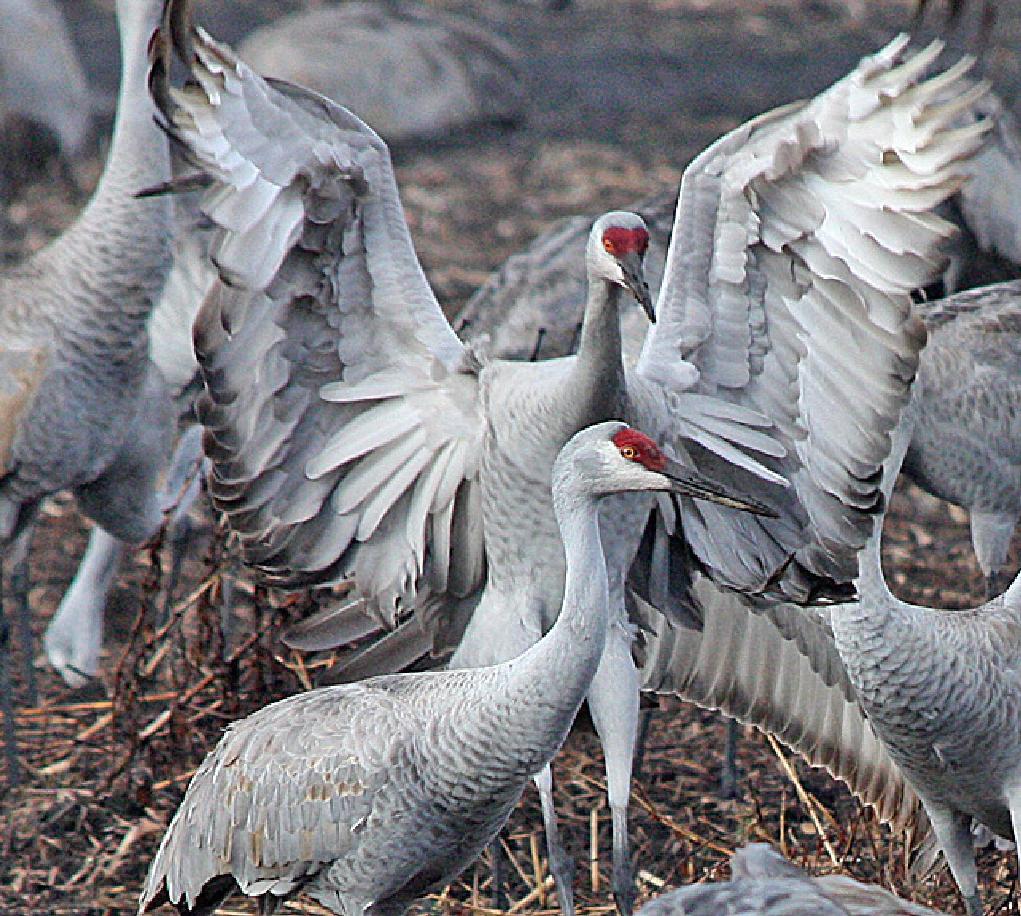 Spreading My Wings by FarolsFotos
