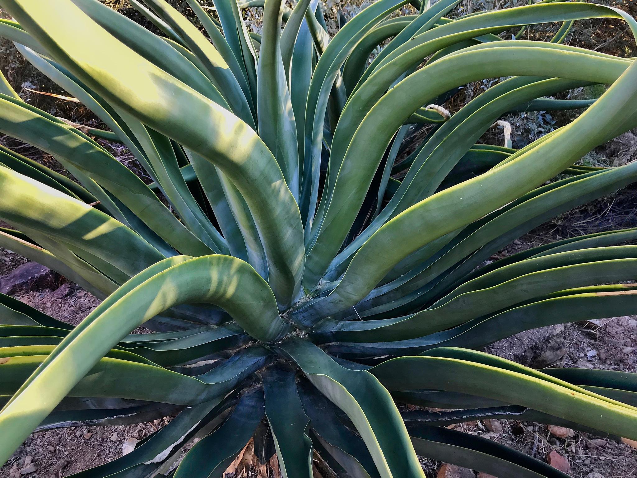 Desert Plants by warriston