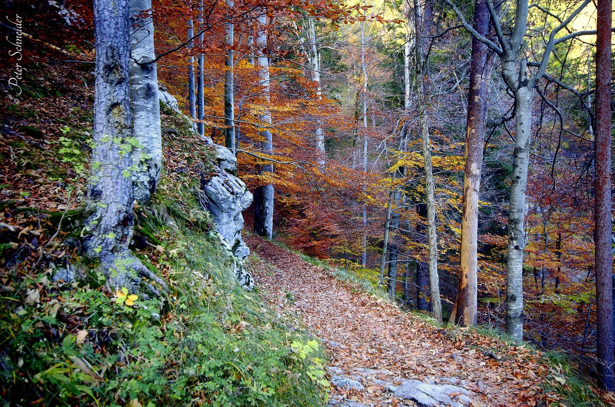 Underway through the autumn. by  Peter Schneider