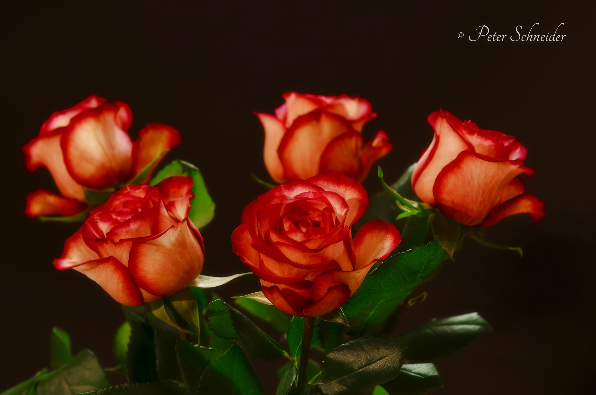5 kisses. by  Peter Schneider