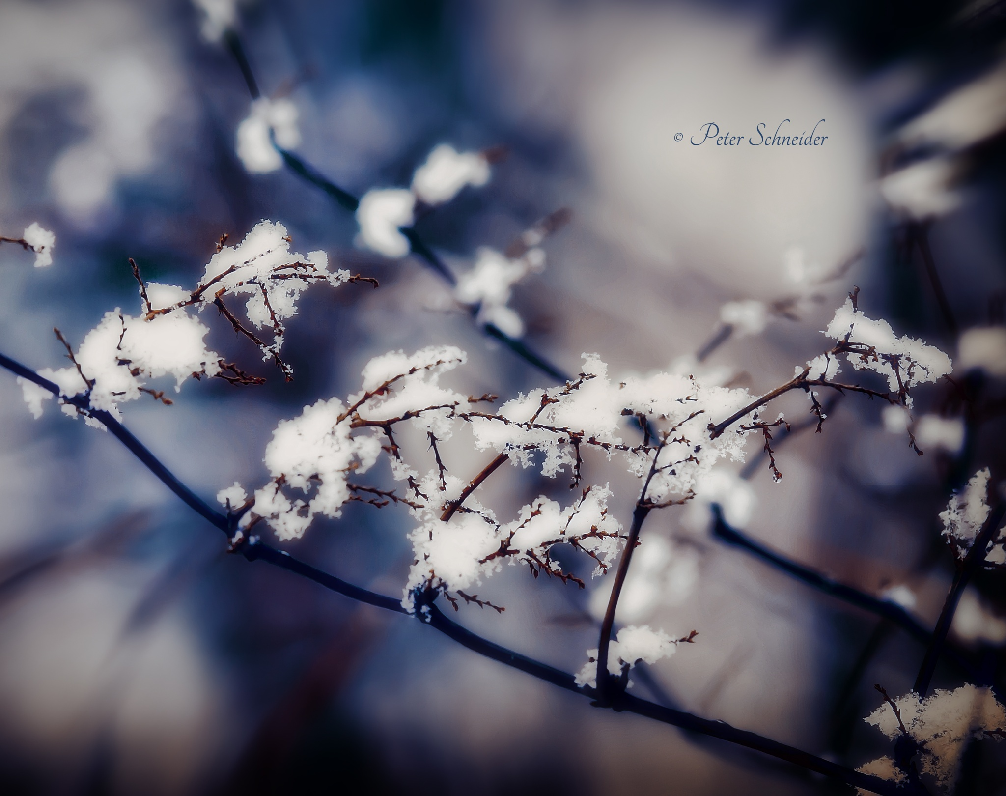 Winter shape. by  Peter Schneider