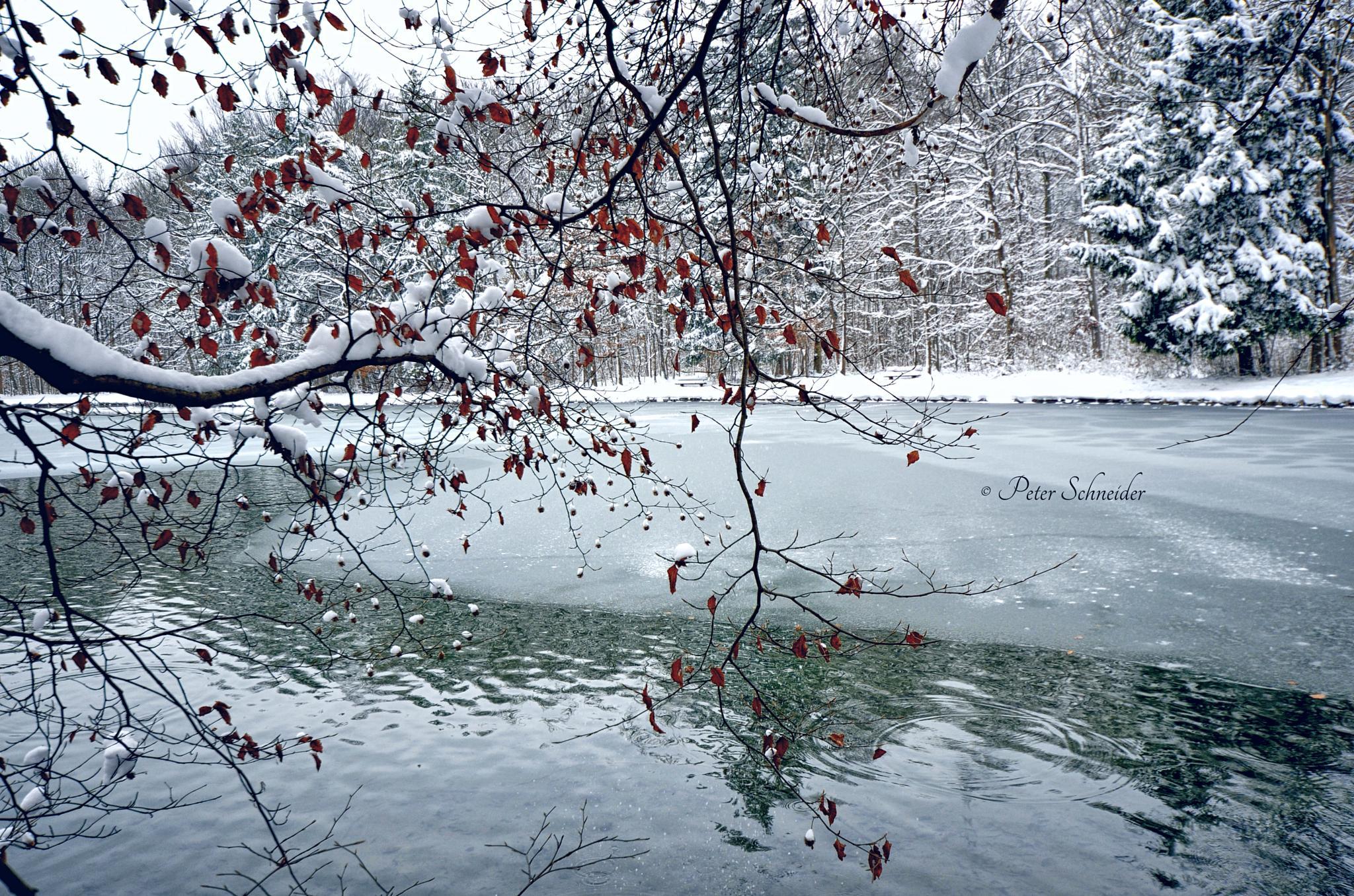 Winter lake. by  Peter Schneider