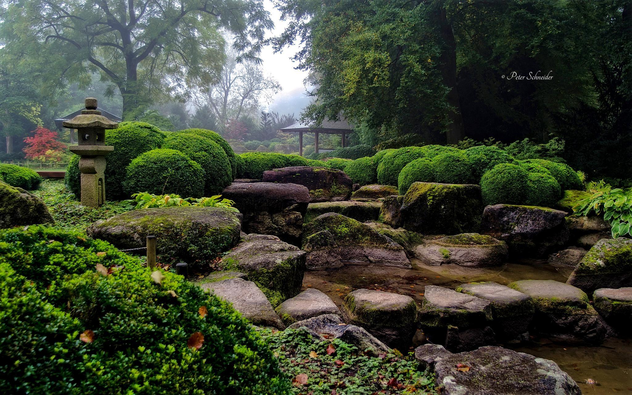 Garden II. by  Peter Schneider