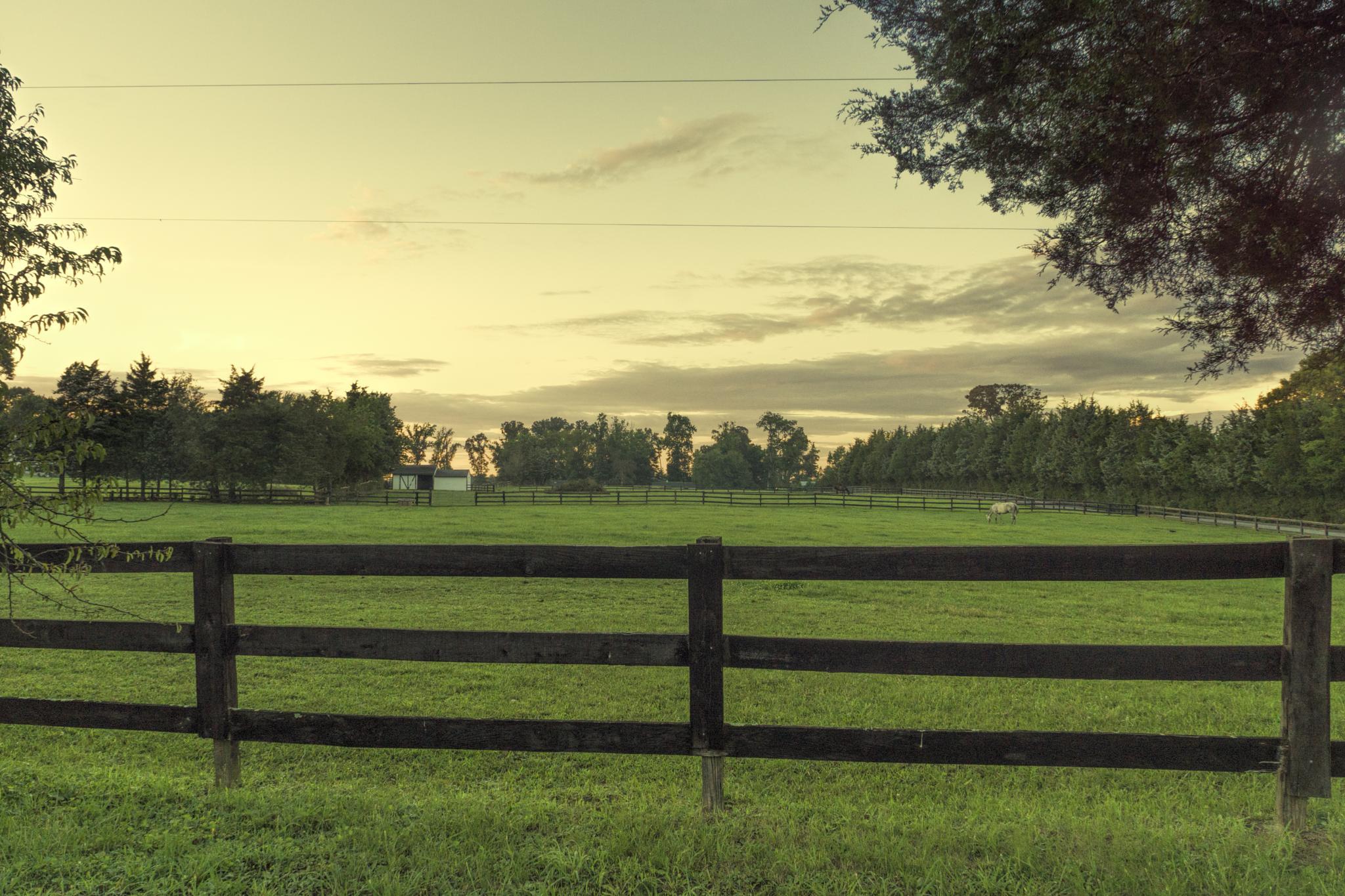 Peeking in on the Farm 2 by mjdrhd