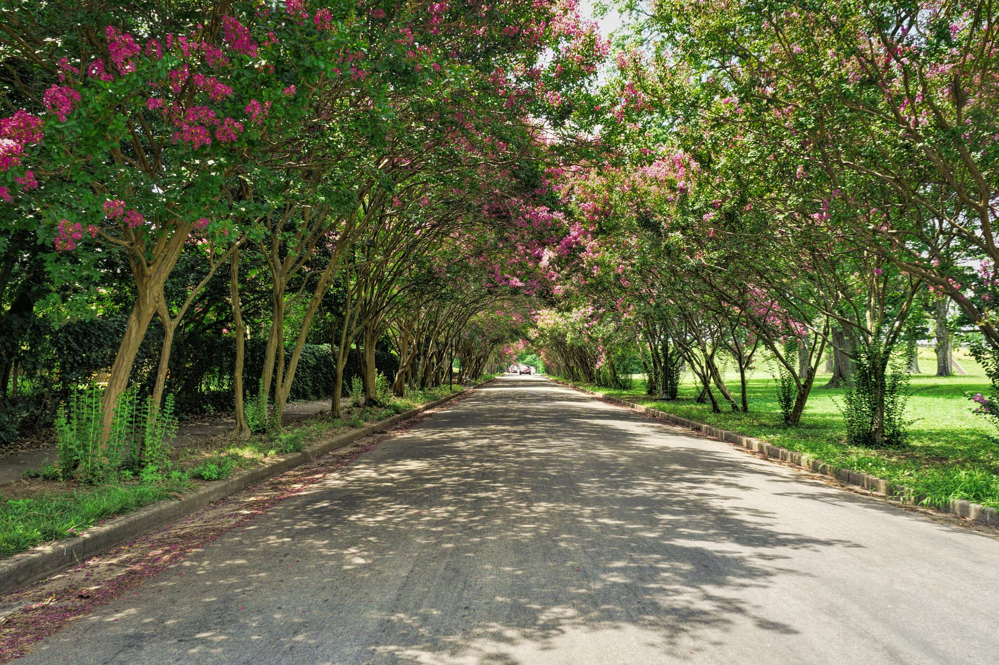 Photo in Street Photography #street #park #trees #color #green #flowers #pink