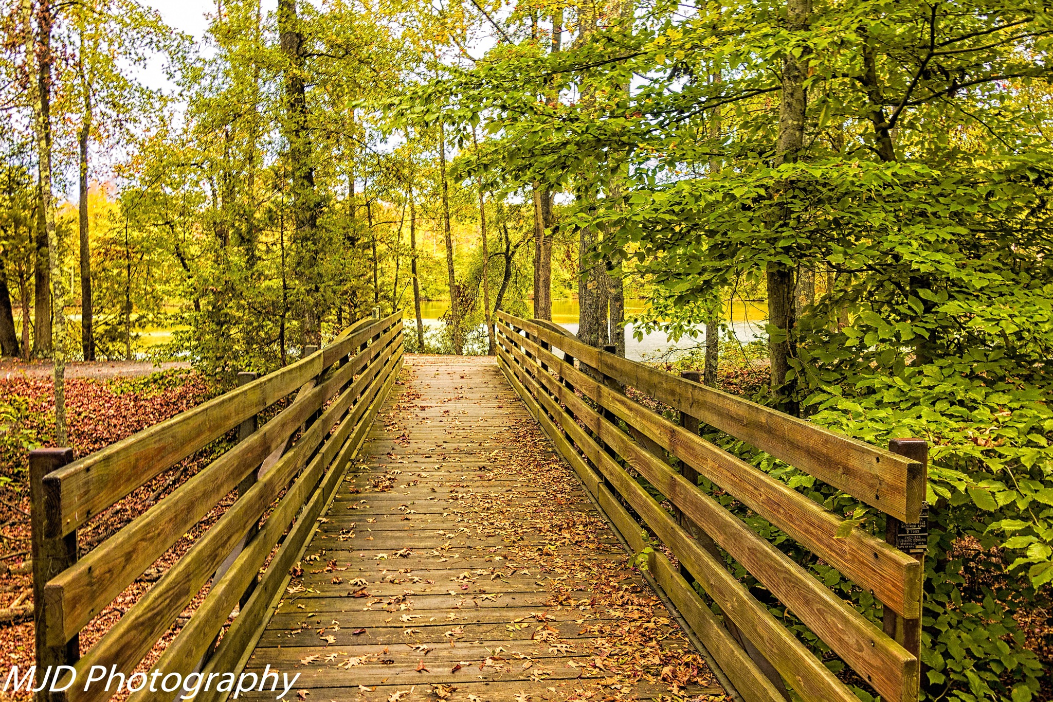 Bridges and Leaves by mjdrhd