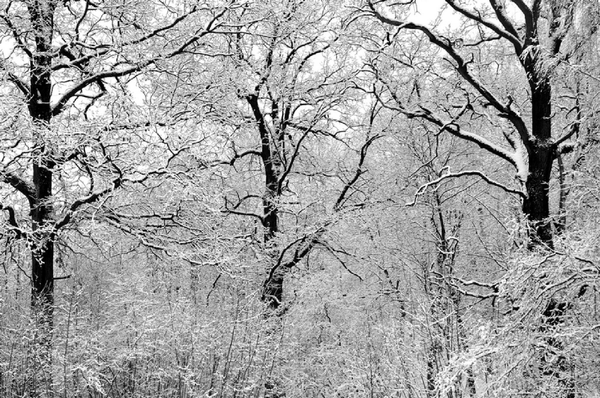 Winter Graphic by stanislovas kairys