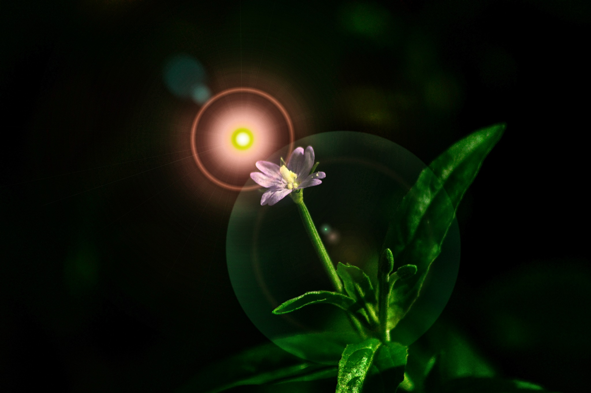 Flower in the light by dew1961cap