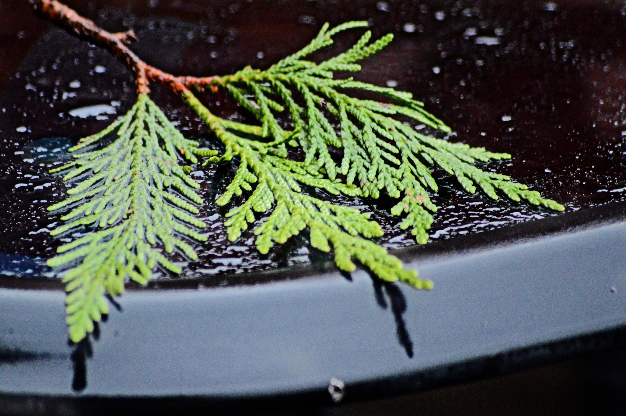 Blown leafs by dew1961cap