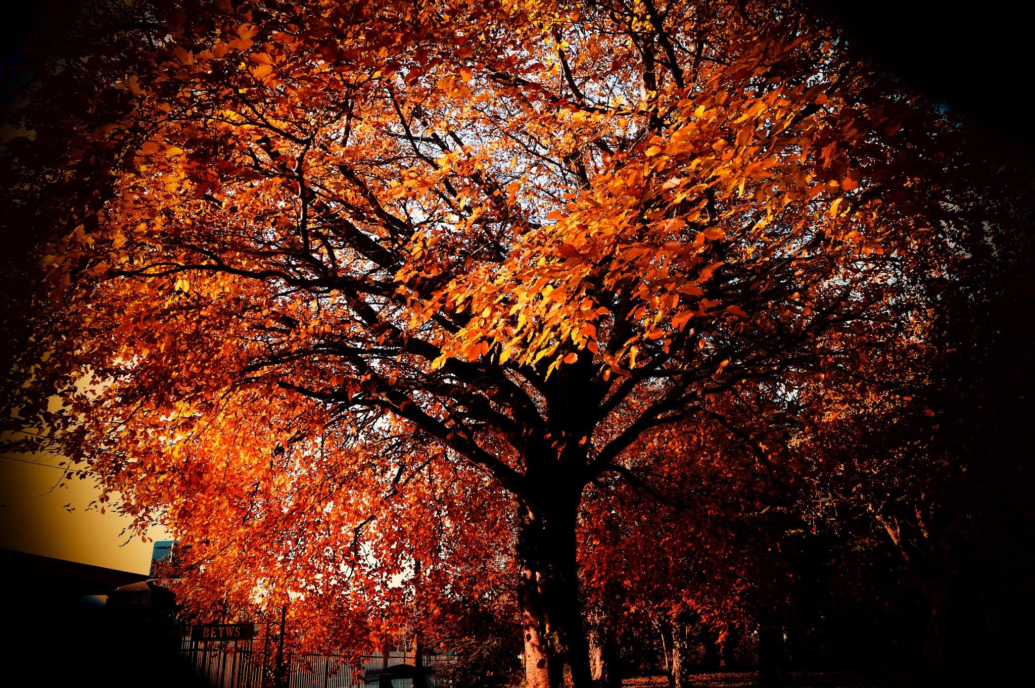 Autumn Tree by dew1961cap