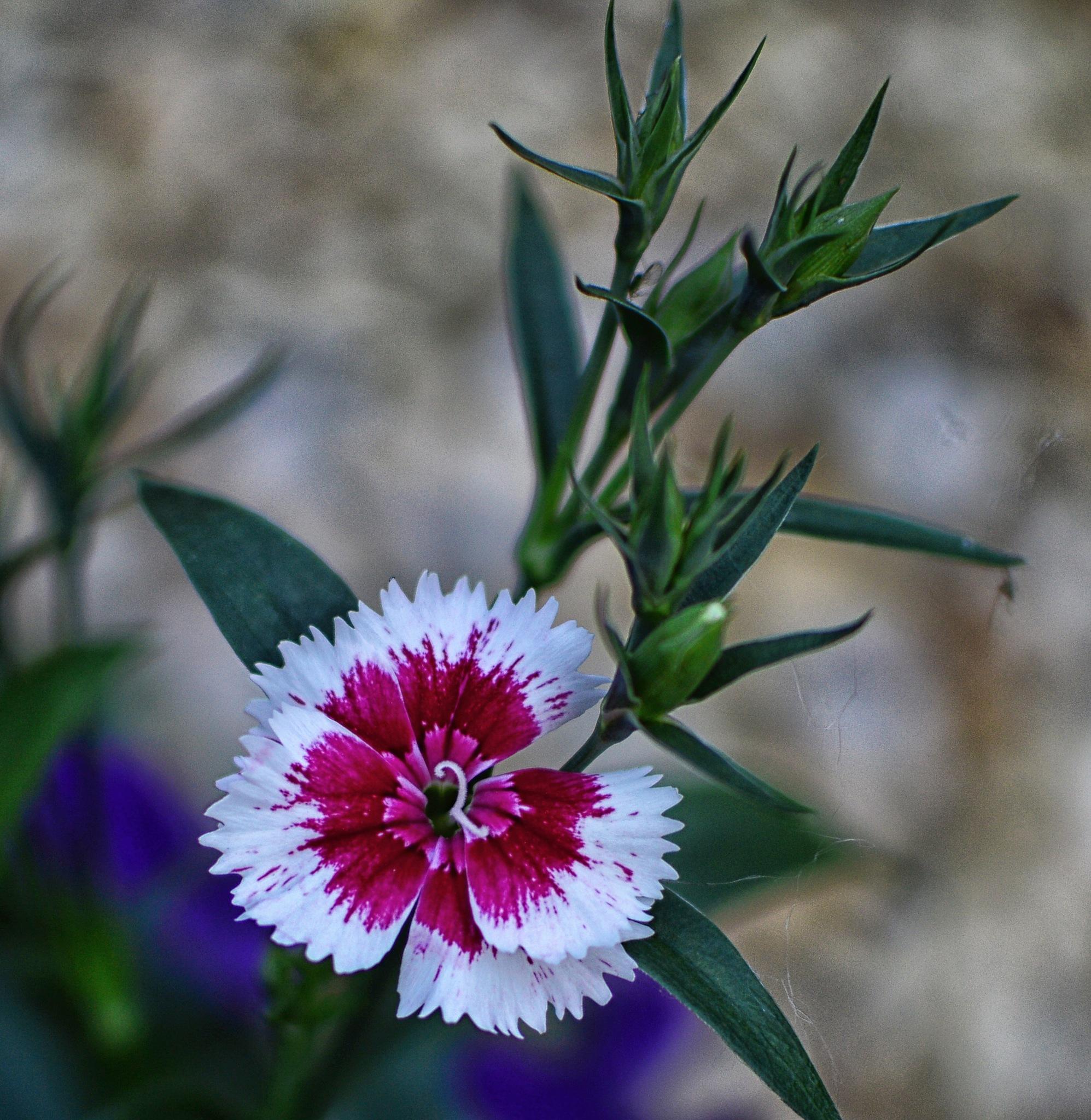 Flower by dew1961cap