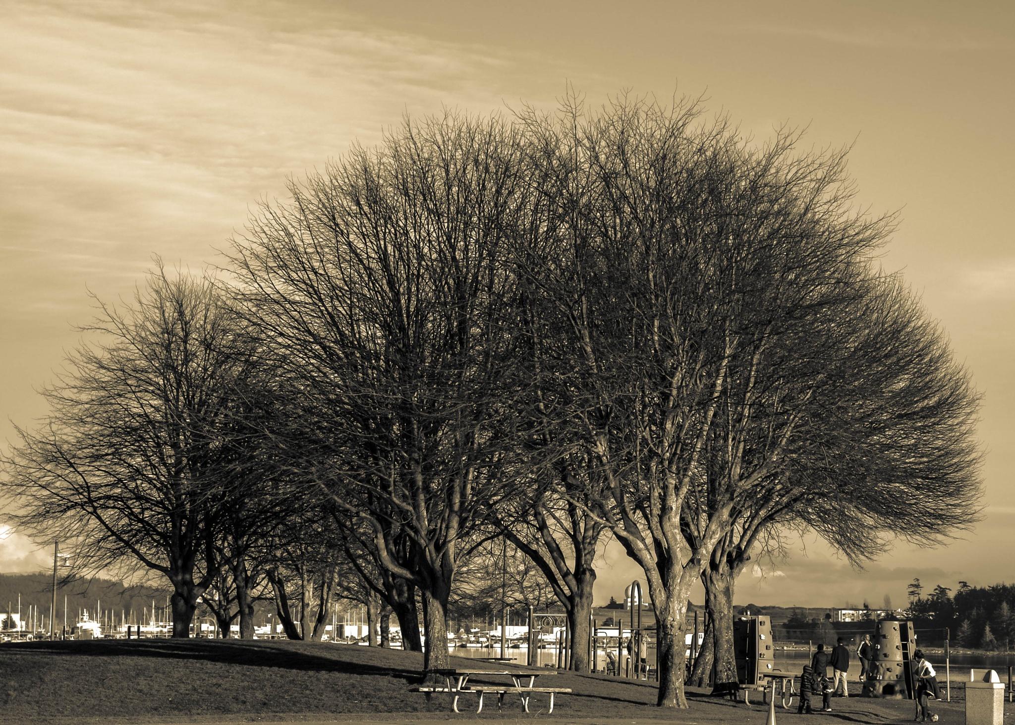 devoid of leaves.. by MTM